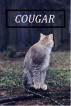 Cougar by Breanne Atkins