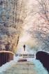Op een winterdag by Raymond Zachariasse