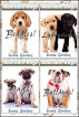 Adorable Dogs Collection Vol. 1 by Scott Gordon