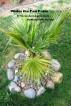 Under the Fan Palm by Richard George