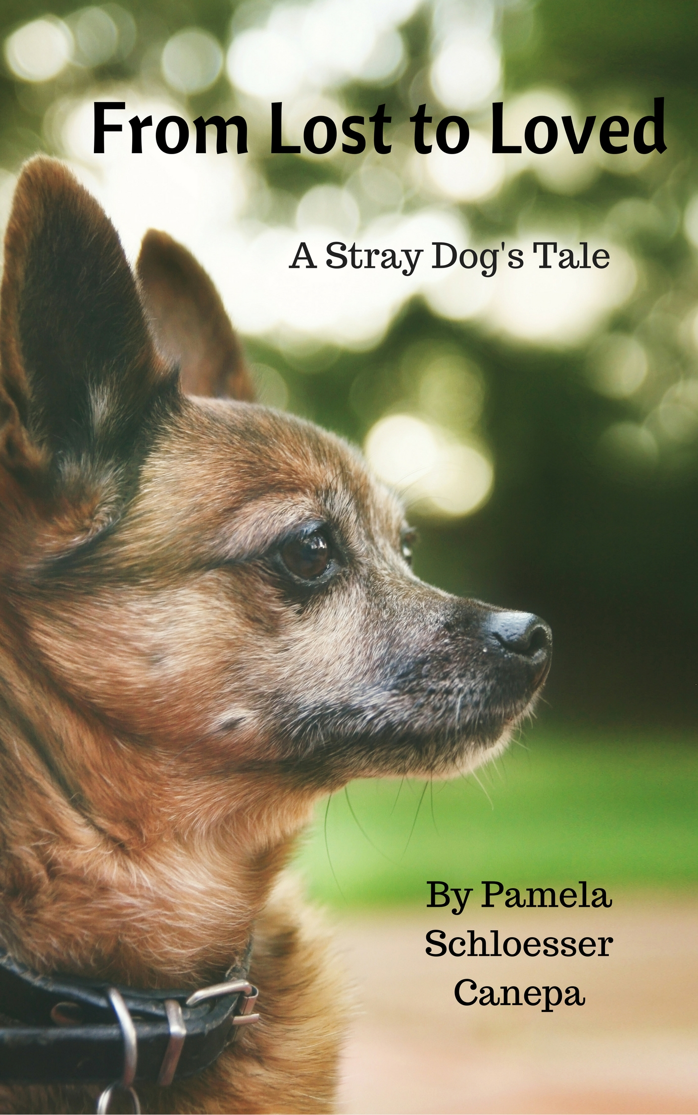 my experience of losing a beloved dog Pet loss help is offers grief support to those who have lost animal companions visitors are encouraged to memorialize their pets through free online postings about their lives.