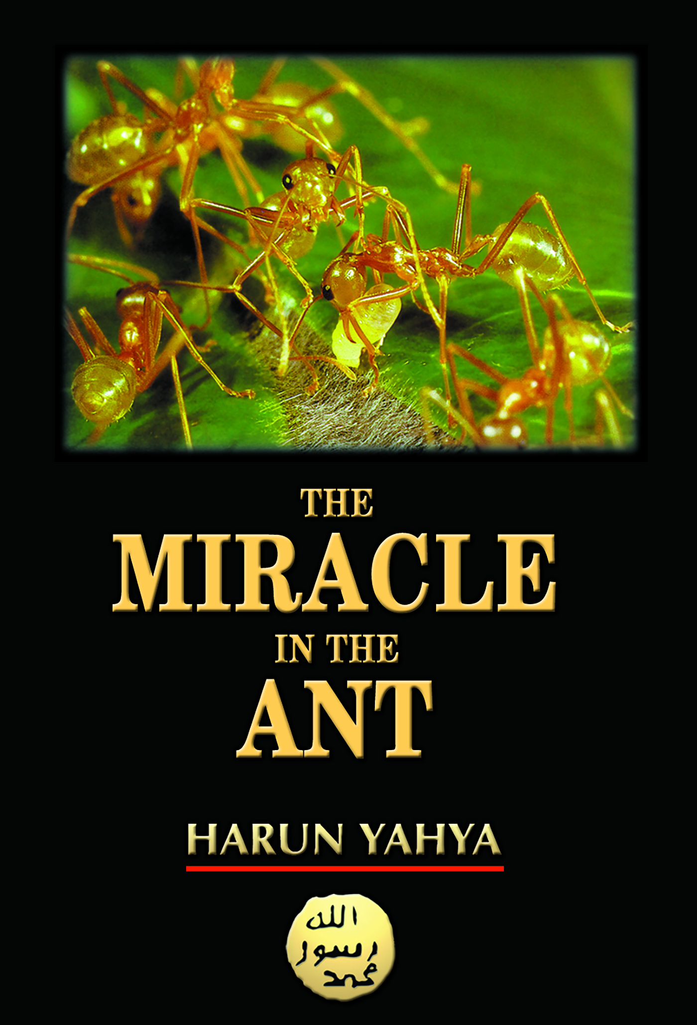 Image result for he Miracle of the ant