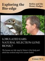 Robin and the Honey Badger - Lobulated ears: natural selection gone bionic?